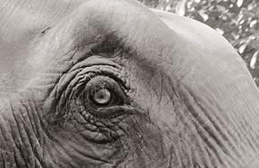 Startseite_Elefant